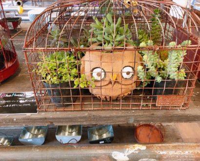 可愛い商品がたくさん♪ オンズガーデン「ガーデニング専門花屋」
